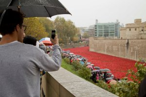 20141103TowerPoppies002