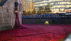 20141103TowerPoppies003