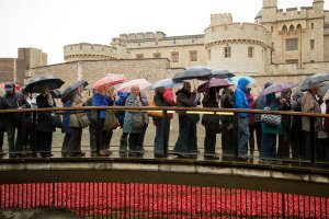 20141103TowerPoppies004