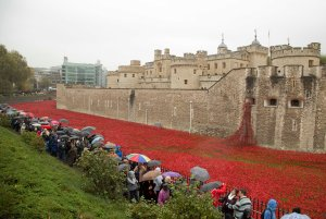 20141103TowerPoppies006