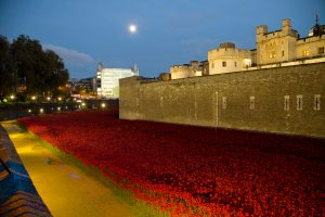 20141103TowerPoppies008
